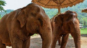 elephant-park-sanctuary-thailand-park