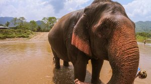 park-thailand-elephant-visiting-sanctuary