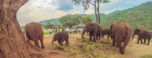 visiting-elephant-sanctuary-park-thailand2